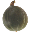courge_olive